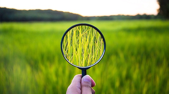 Looking at field with magnifying glass